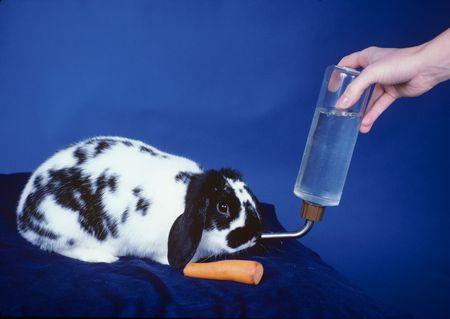 Feeding the Rabbit
