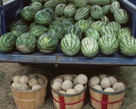 watermelons and canalopes