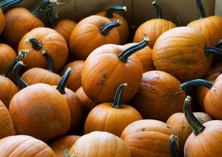 Many small Pumpkins