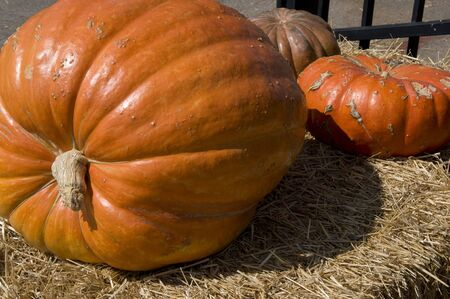large pumpkin: Very large pumpkin