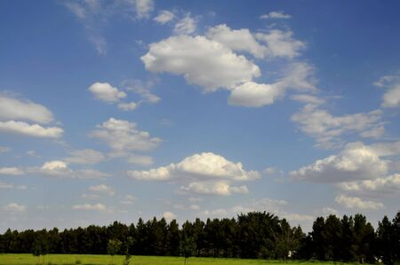 Green Grass and Trees with blue sky and clouds