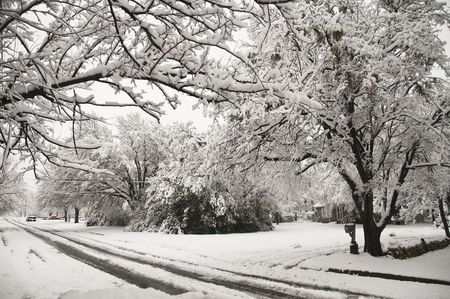 Snow covering tree lined street