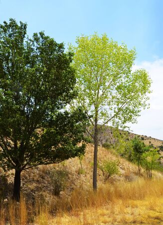 Trees in New Mexico