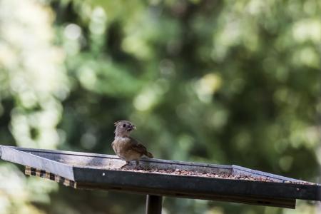 Baby bird eating dinner