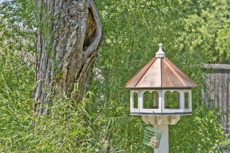 Backyard birdhouse by large tree surrounded by greenery