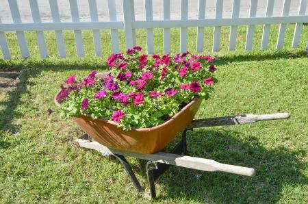 Flowers in wheel barrow Stock Photo