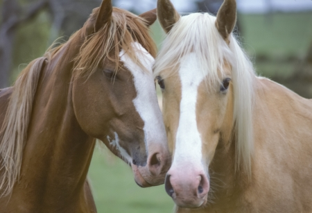nudging: Two Horses in Love