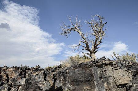 Lonesome tree on rock clliff
