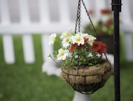 Red and Yellow Petunias in a Hanging Basket