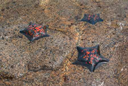 warm water fish: Three Starfish is not deep in the sea. Day.