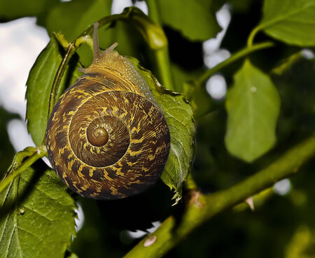 vibrance: snail on the leaf