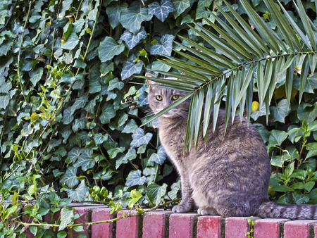 cat looking behind the plants photo