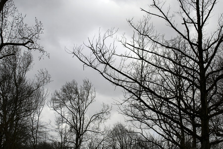 tree branches: tree branches in a dark cloudy sky