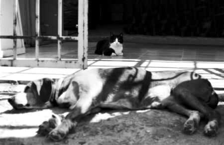 a cat sitting behind the sleeping dog photo