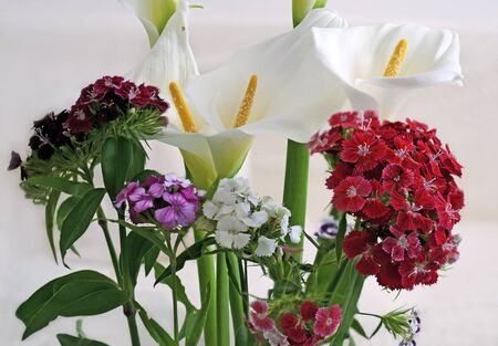 callas: callas and flowers Stock Photo