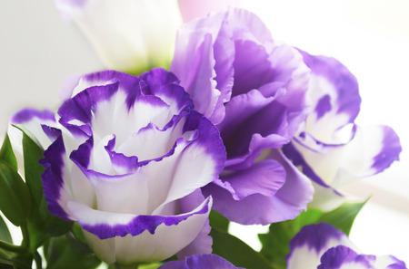 purple flower: purple flower bouquet