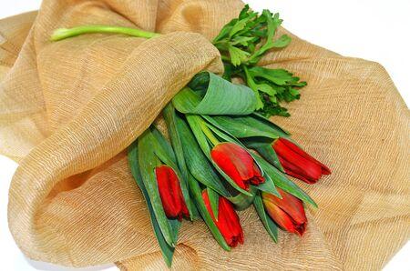red tulips: red tulips - red flower - still life flower - tulip flower