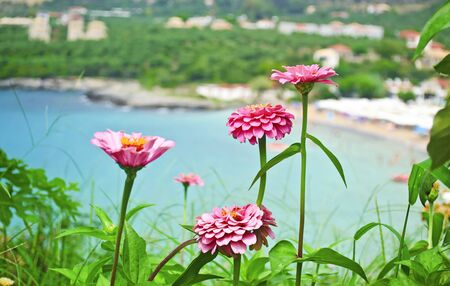 messinia: pink flowers in front of the Stoupa beach in Peloponnese Greece Stock Photo
