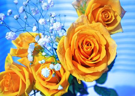 yellow roses: amarilla ramo de flores rosas con el fondo azul