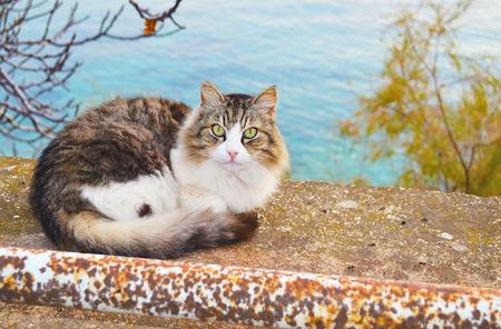 eyes green: hermoso gato con grandes ojos verdes que se sientan en la naturaleza Foto de archivo