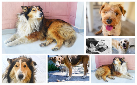 quadruped: collage with dog photos - dog photos collection