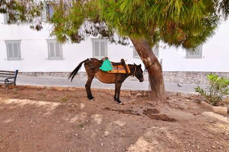 house donkey: donkey the mean of transport at Hydra island Greece