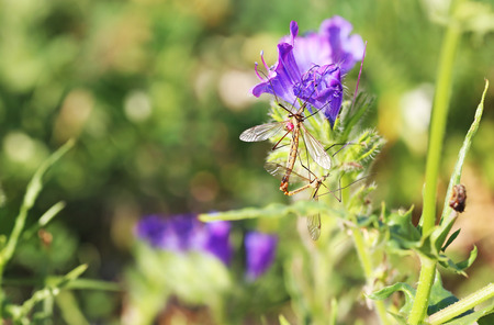 insects sitting on blooming purple flowers in the nature - macro photography Stock Photo