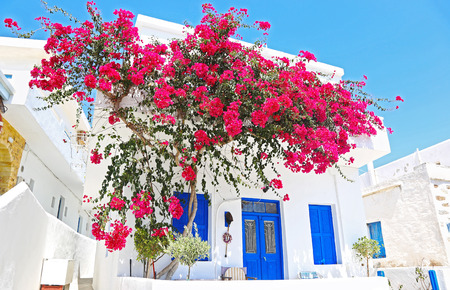 traditional houses with pink bougainvilleas at Ano Koufonisi island Cyclades Greece