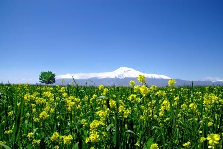 armenia:  Mount Ararat