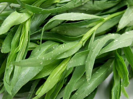 tarragon: Tarragon Stock Photo