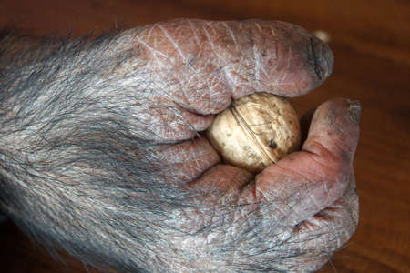 monkey nuts: Monkey hand with Nut