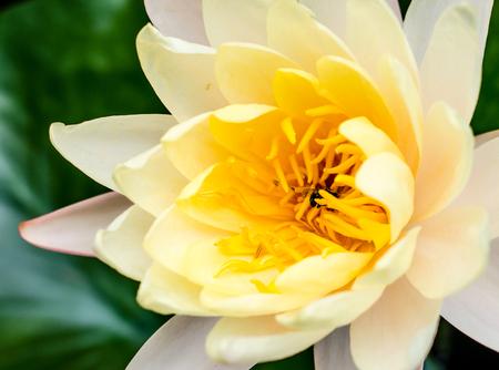 bee swarm: Lotus bee swarm