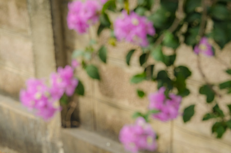 wooing: flowers fade into the background Stock Photo