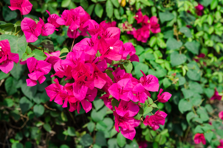 woo: Pink flowers in forest Stock Photo