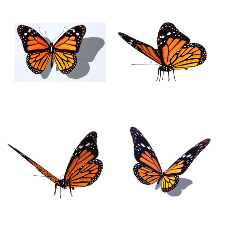 butterfly, different views photo