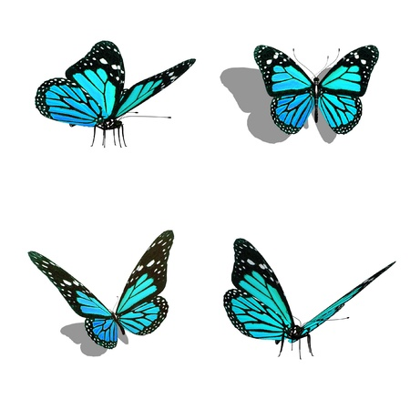 butterfly collection, different views photo