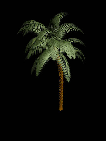 natural arch: Palm tree in the dark