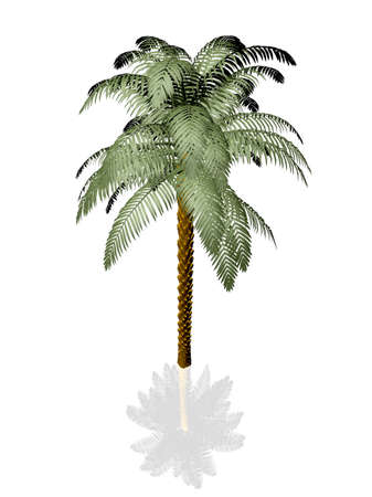 natural arch: Palm tree on white background with reflection