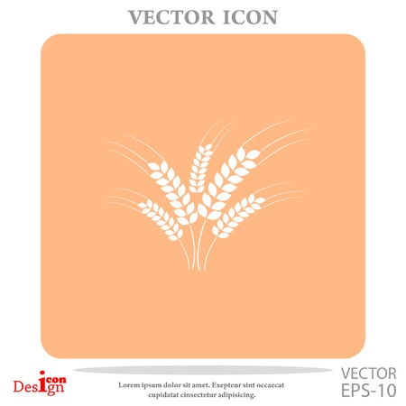 wheat ears vector icon Illustration