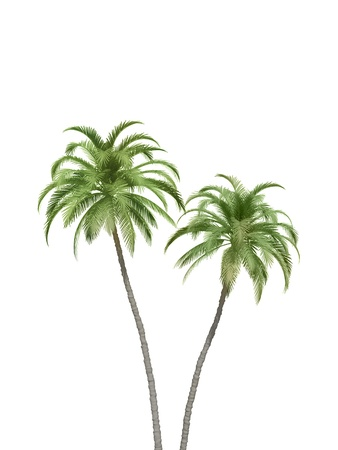 tree  shadow: palm trees couple Stock Photo