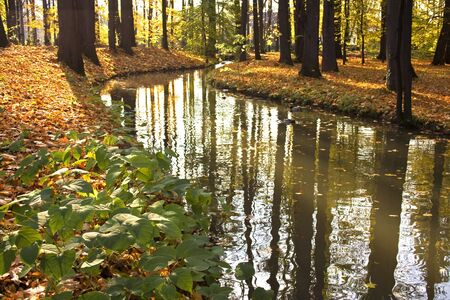 autumn river in forest