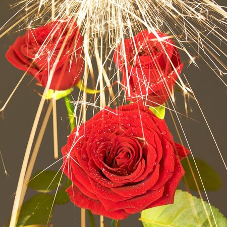 rose under the sparks rain 19
