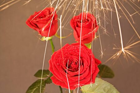 rose under the sparks rain 4