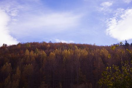 blue sky over the woodland