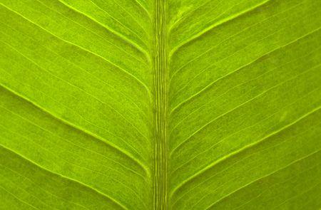 closeup to green leaf, texture