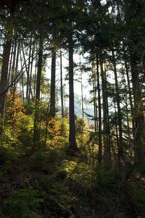 forest under sun