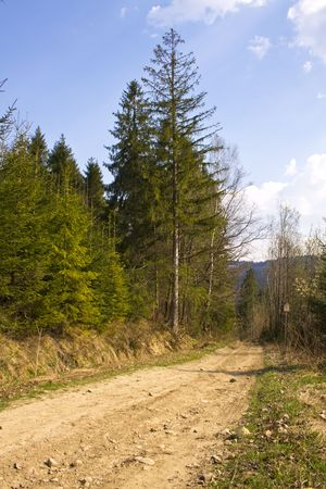 road trough the forest photo