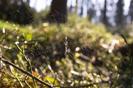 small spider on web in forest photo