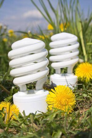 energy saving bulbs with dandelions