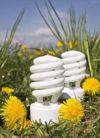 energy saving bulbs with dandelions 2 photo